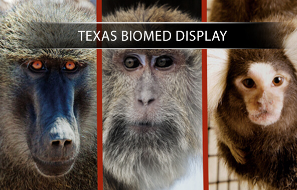 Texas Biomed Display portfolio logo